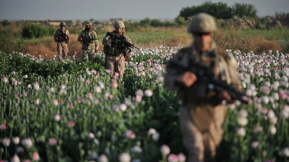 US Marines in a poppy field in Afghanistan