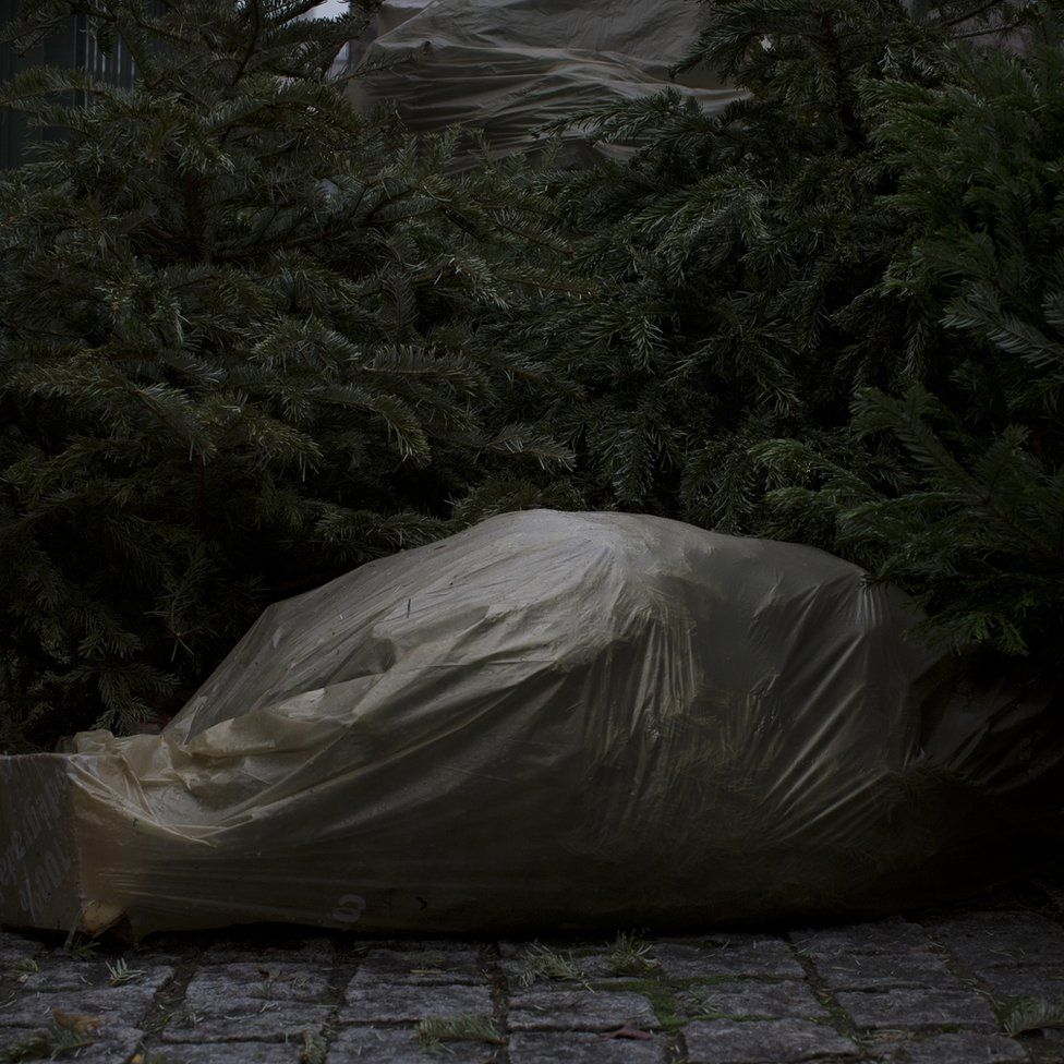 Trees covered with plastic sheeting