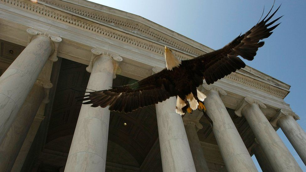 Challenger, a bald eagle, flies in Washington DC