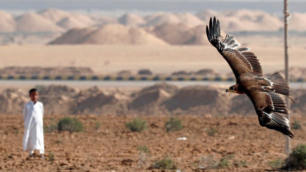 A Bedouin boy looks at falcon during a celebration with Egyptian clubs and austringers on World Falconry Day at Borg al-Arab desert in Alexandria, Egypt, November 17, 2018