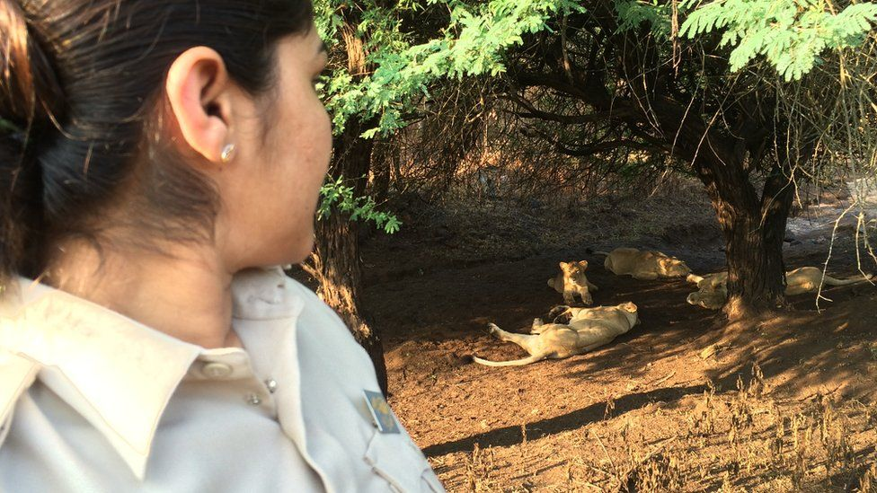 Darshana Kagada with a group of lionesses and cubs in the background