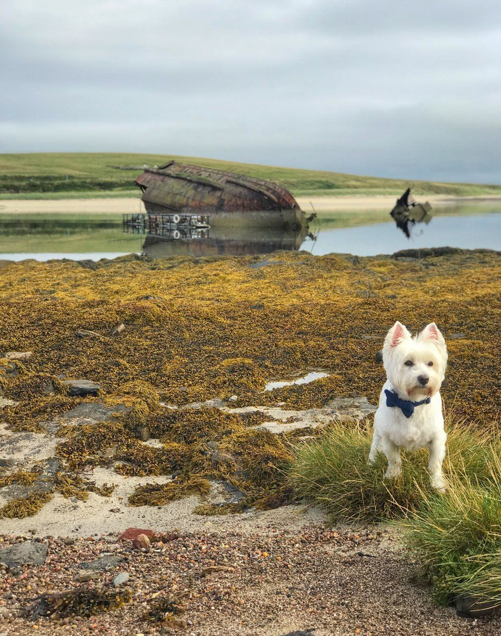 Dog and boat wreck