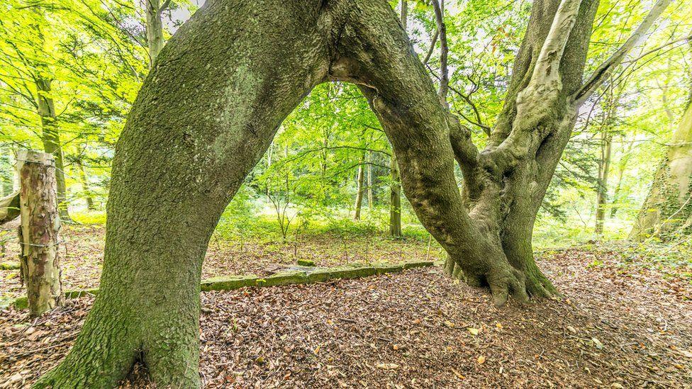 N-shaped tree