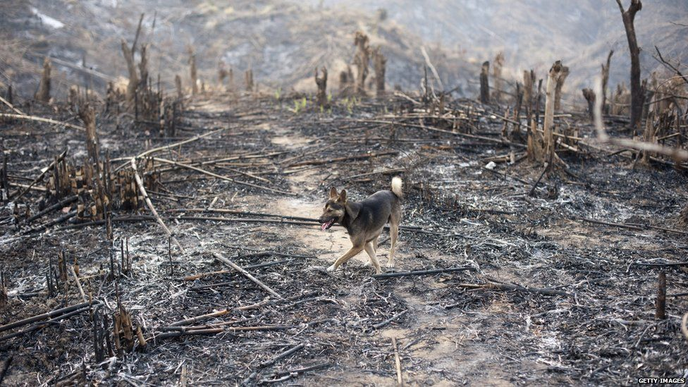 Deforested area in Bago, Myanmar (April 2014)