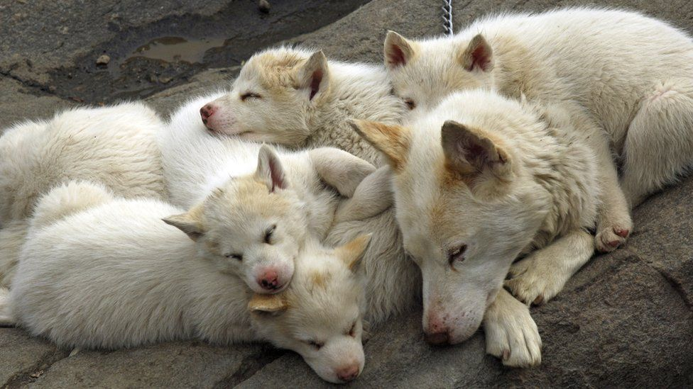 A dog with puppies