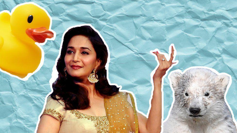 A rubber duck, Bollywood star Madhuri Dixit and a polar bear cub