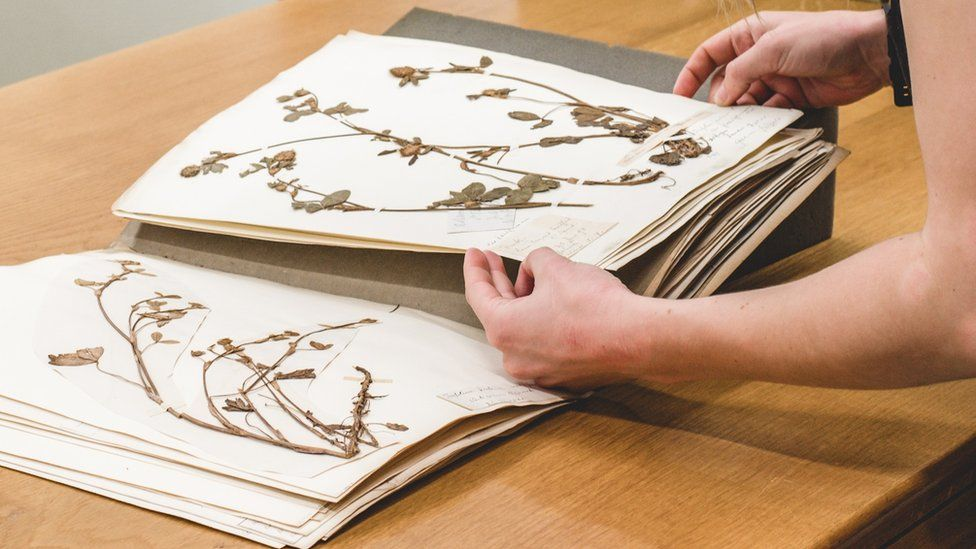 A global heritage: Oxford University's vast collection of dried plants