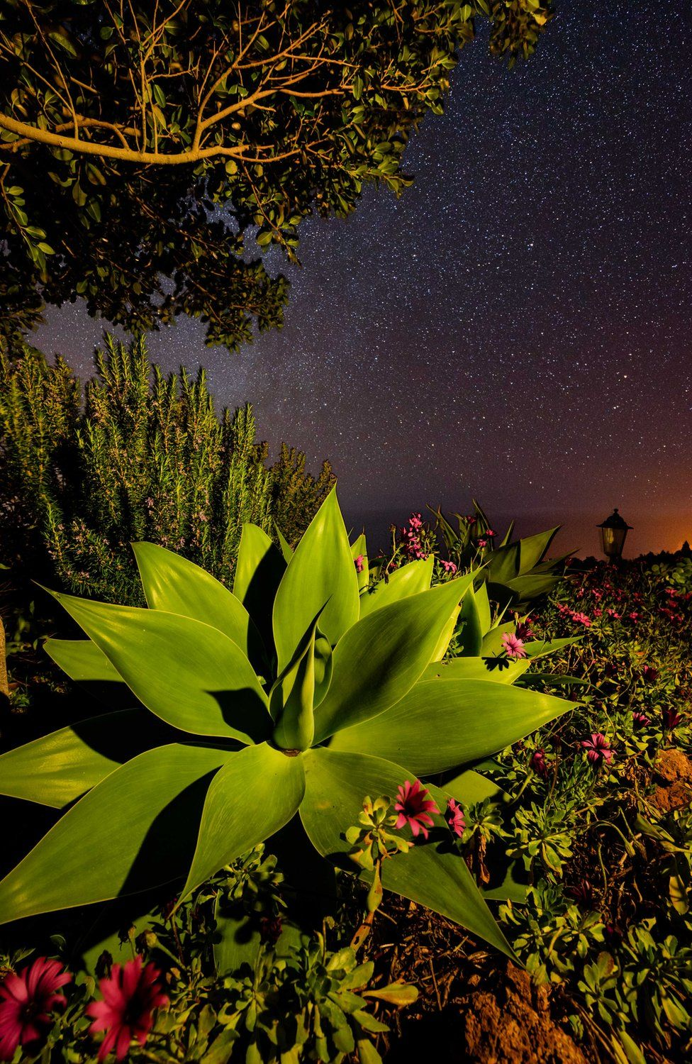 Trees, ferns and succulents are lit by a starry night