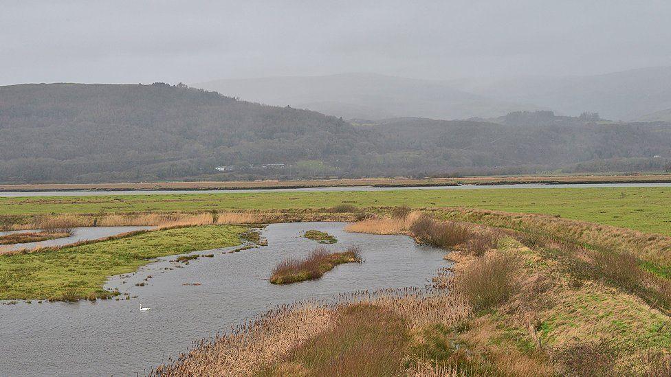 RSPB Ynyshir. A lone swan patrols its territory and in the distance, the Tarrenau range is blanketed in rain.