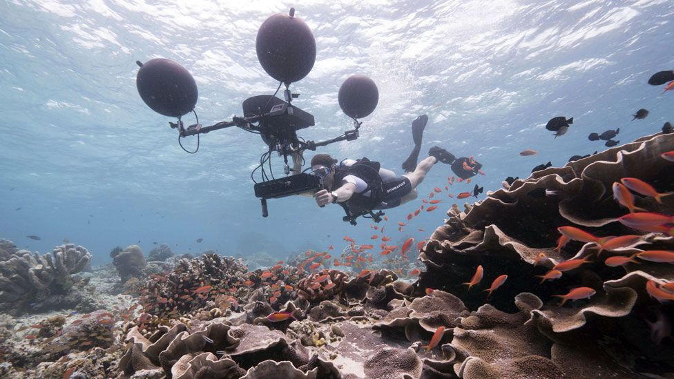 A Blue Planet producer uses a multi-directional hydrophone to record the sounds of the reef