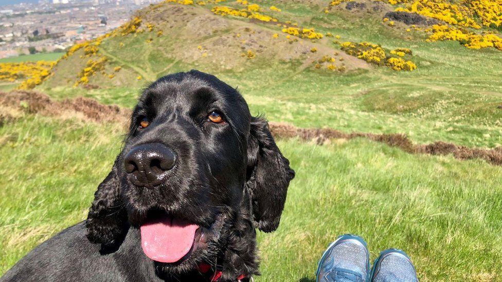 Archie on Arthur's Seat, Edinburgh