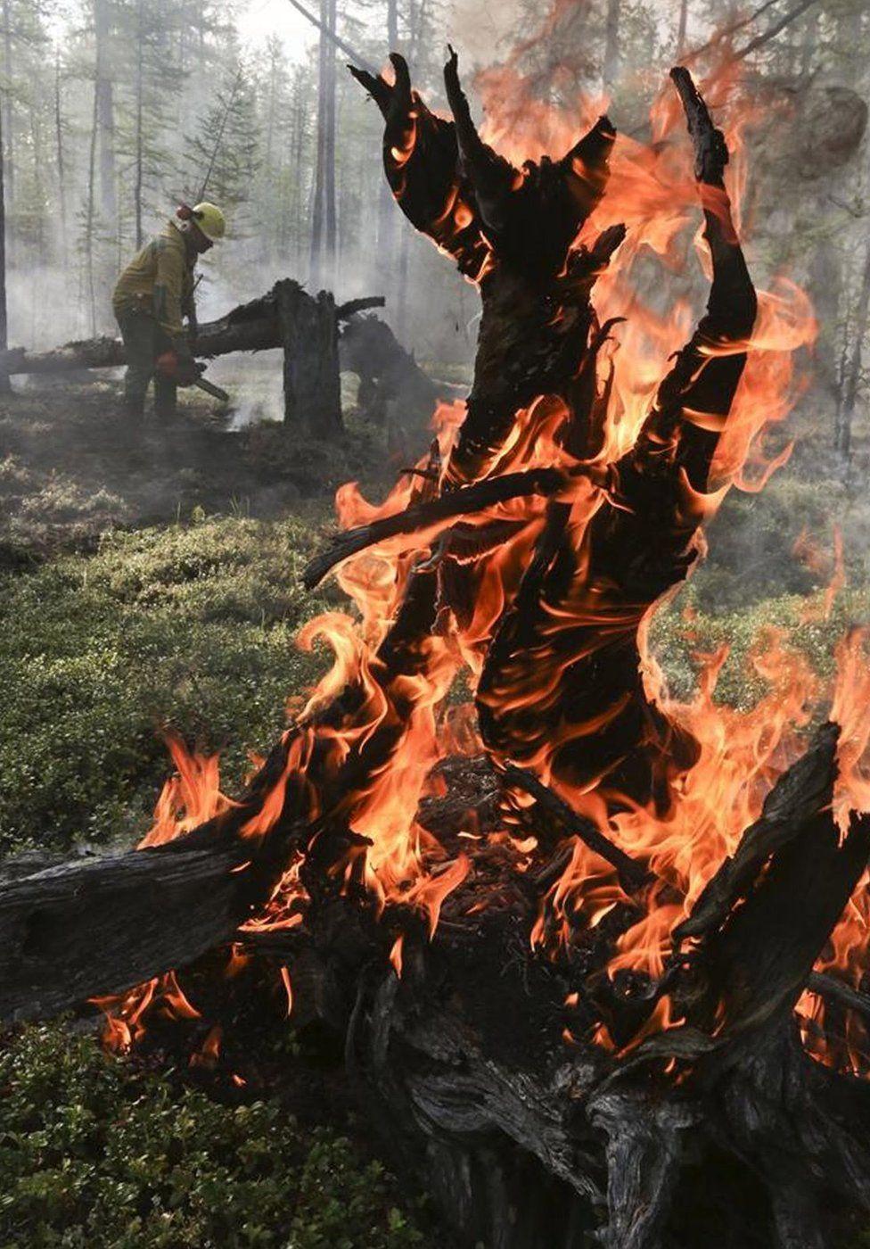 A burning tree in Krasnoyarsk region, Russia. Photo: 1 August 2019