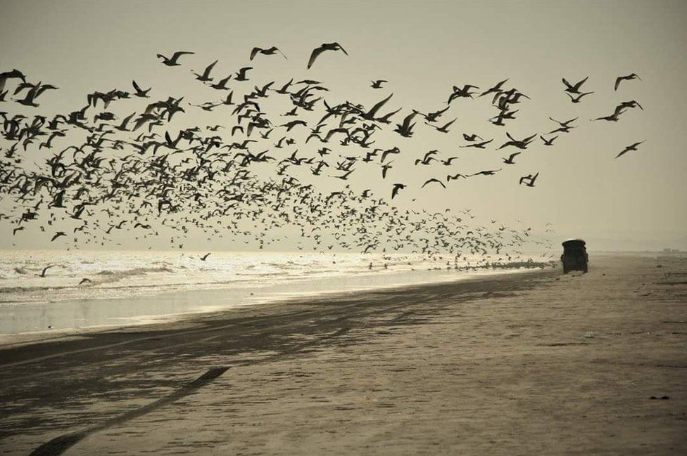 Birds fly over the sea as a Jeep travels along