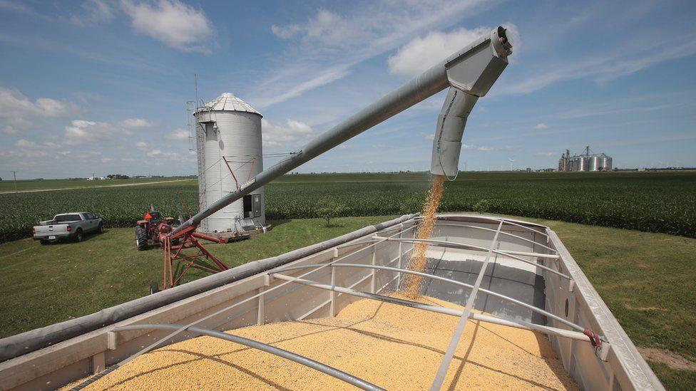 Farmer John Duffy loads soybeans from his grain bin onto a truck before taking them to a grain elevator on June 13, 2018 in Dwight, Illinois.