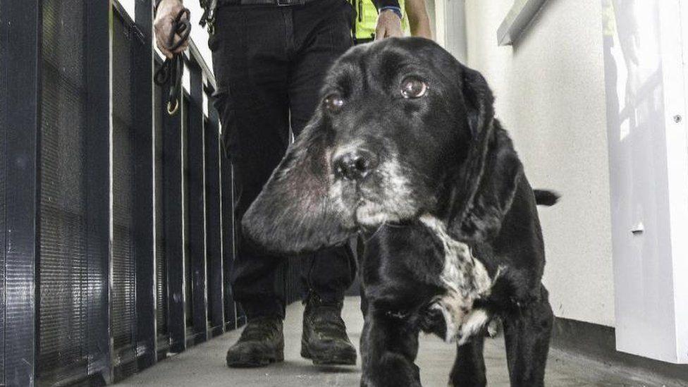 West Yorkshire Police drugs dog patrol