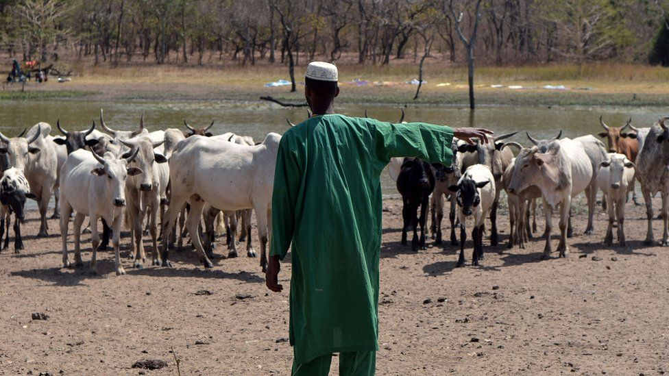 Fulani herders can be seen across west Africa