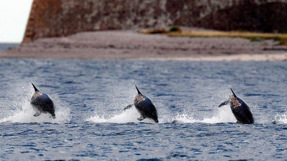 A sequence of images taken of Spirtle near Fort George on the Moray Firth