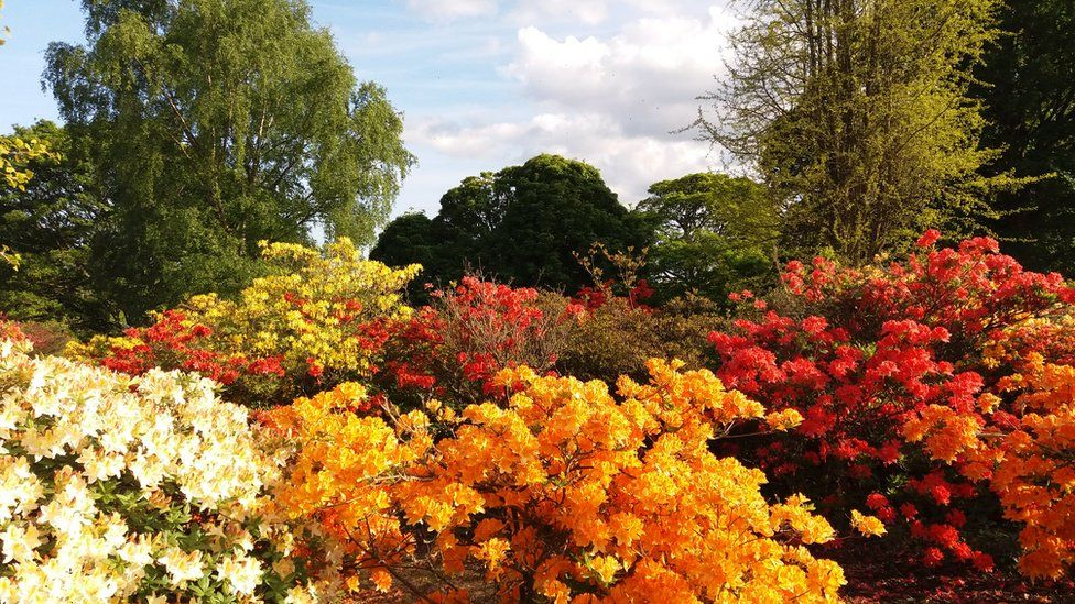 Colourful flowers fill the foreground and contrast with the green trees in the background