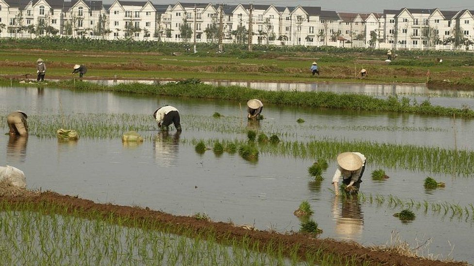 Rice farmers in Vietnam