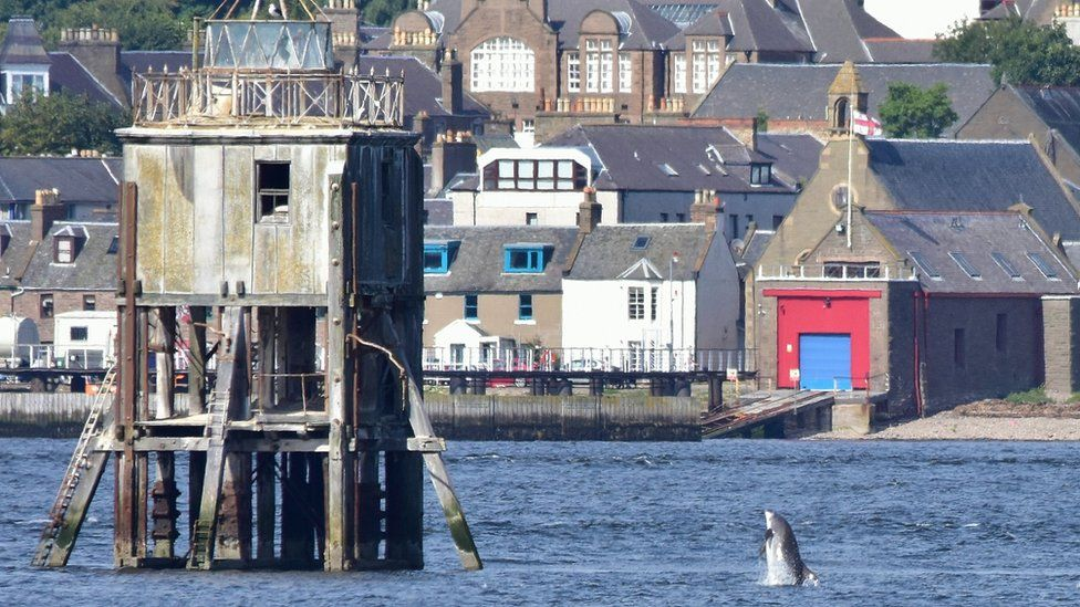 Dolphin at Broughty Ferry