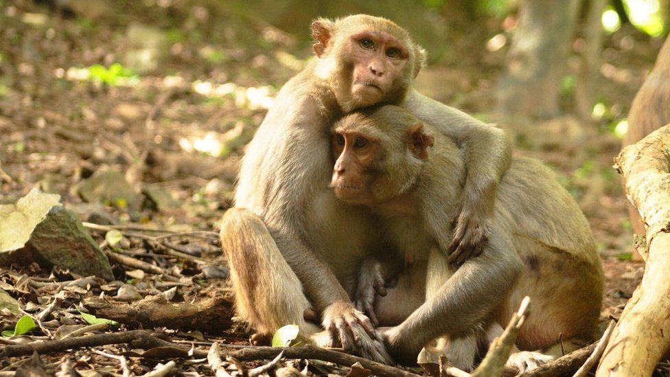 Pair of monkeys