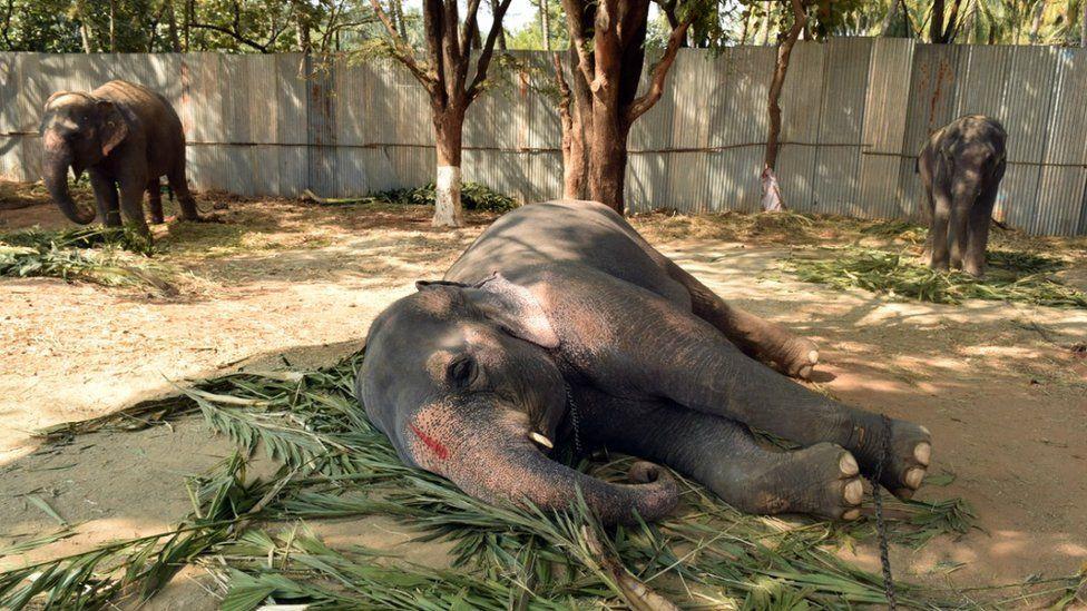 Elephant taking a nap