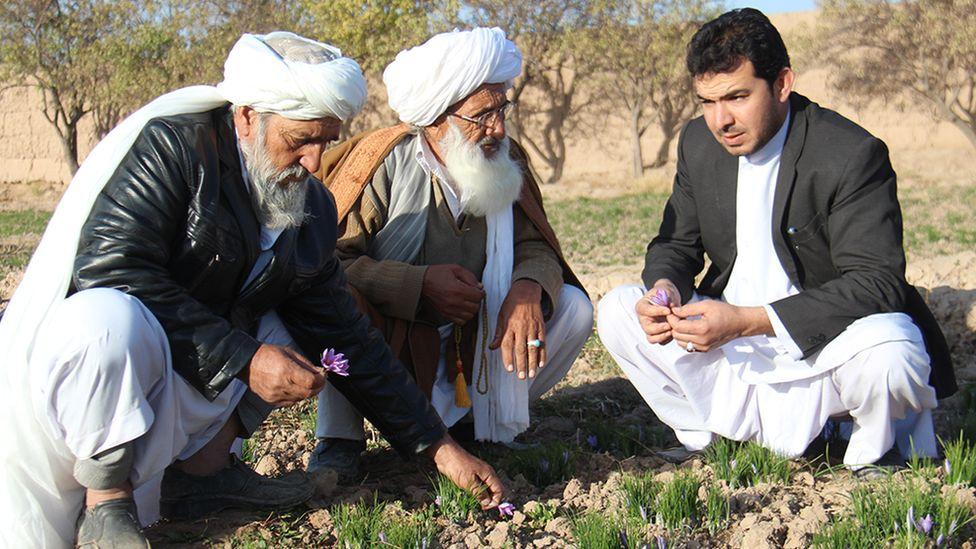 Rumi Spice co-founder Keith Alaniz discusses with Afghan crocus farmers