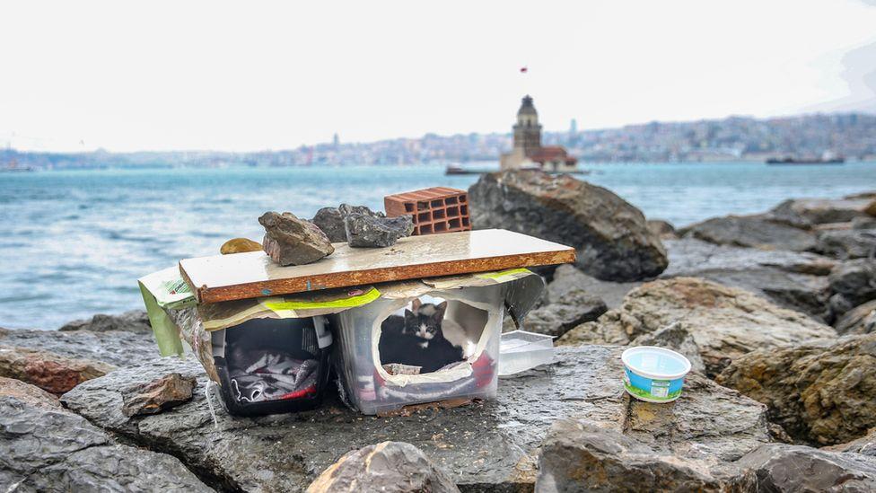 Cats shelter on Istanbul shoreline 2020