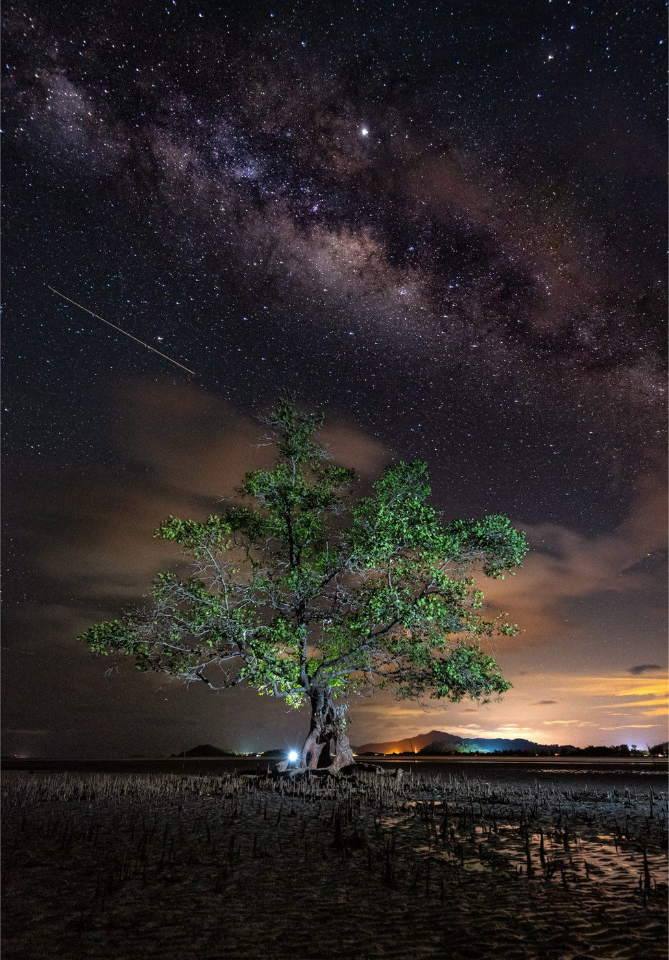 Mangrove forests: Photography winners show beauty of ecosystems thumbnail