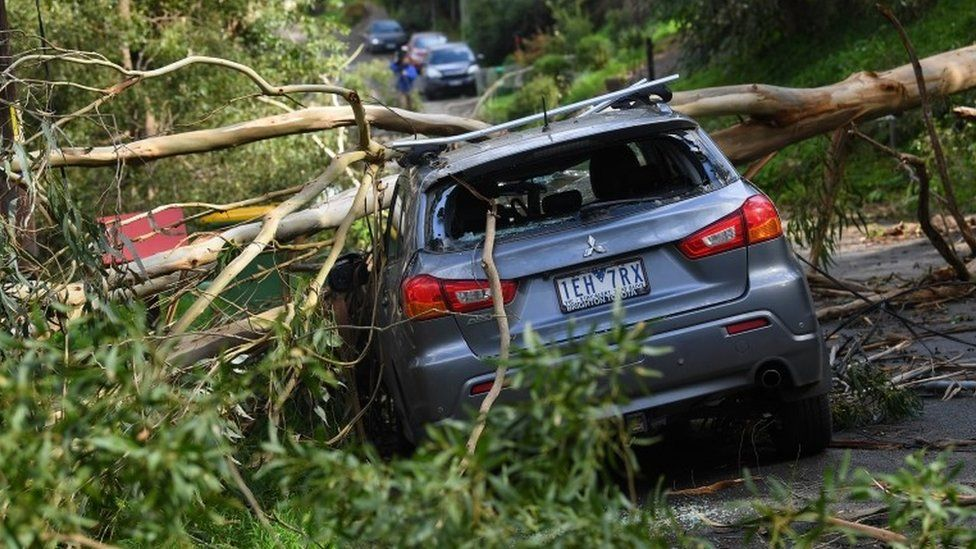 A fallen tree on a crushed car in Melbourne