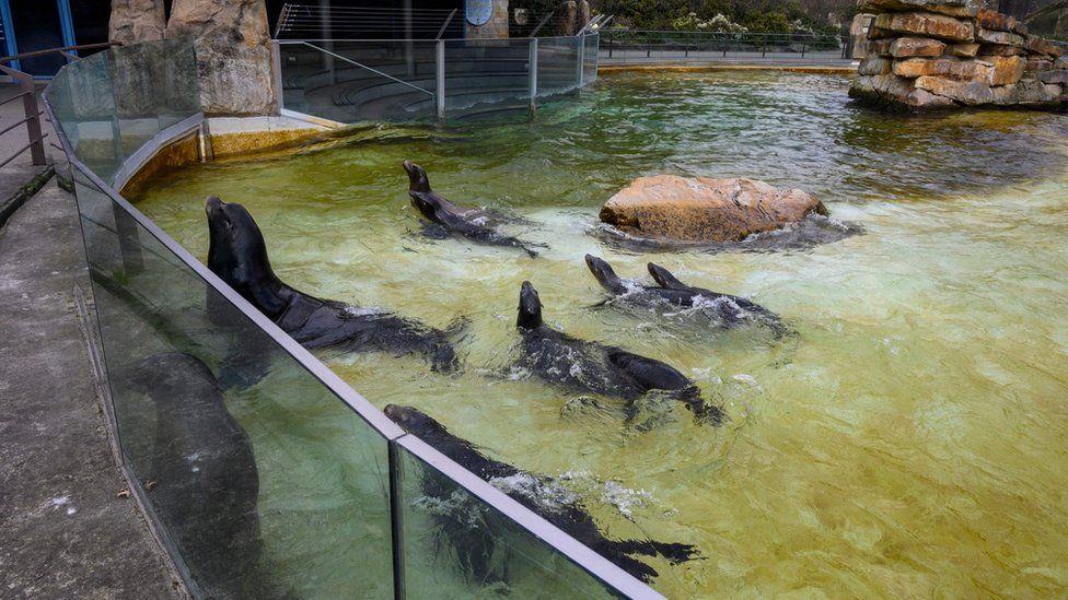 Seals at Berlin Zoo, 1 Apr 20