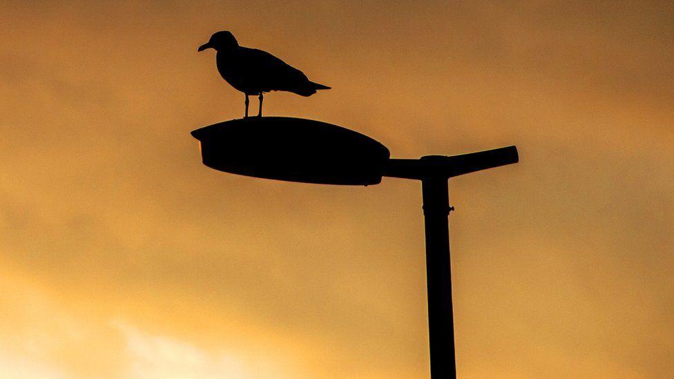 A bird standing on a street light