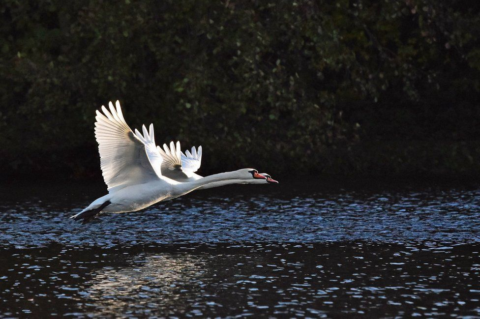 Two birds flying across water