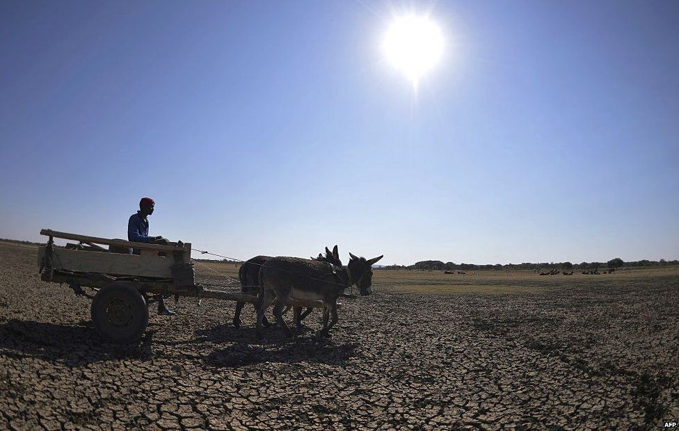 man crosses the dried Bokaa Dam with a donkey cart on the outskirts of Gaborone on August 14, 2015 in Botswana.
