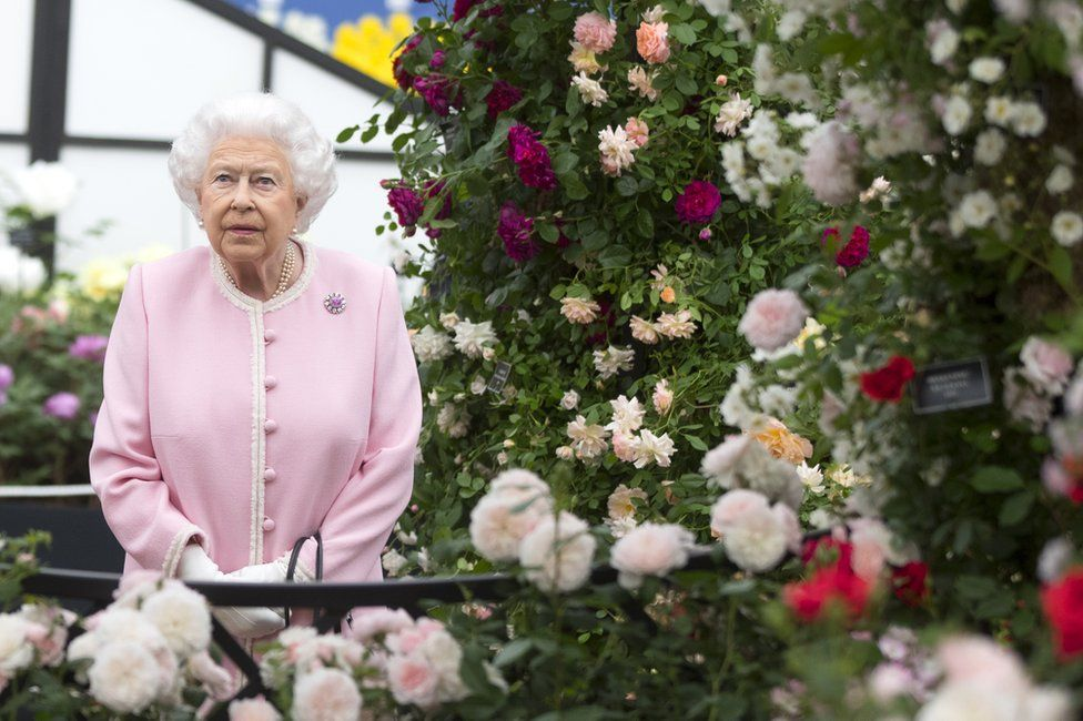 Queen looks at a display of Peter Beales roses.