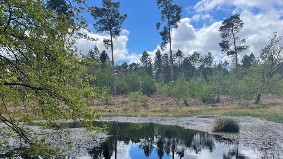 Black Lake peat bog in Delamere Forest has been restored - a project that has taken 20 years