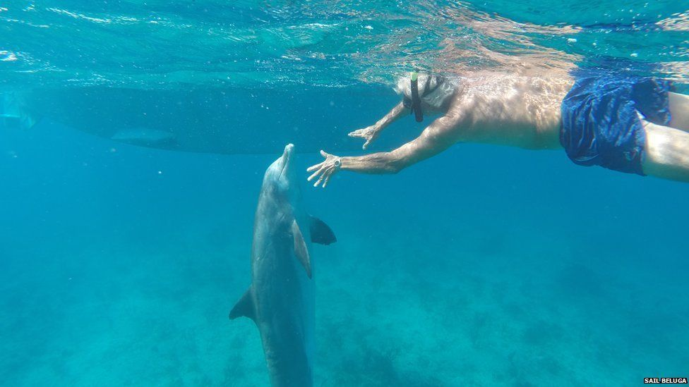 Tim Ainley swims with the dolphin Jojo