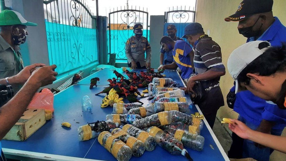 The parrots were freed from the bottles when found in Fakfak in Indonesia's West Papua region
