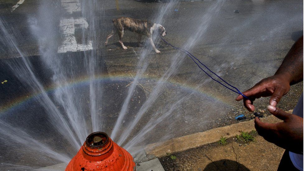 A dog cools off under a spraying fire hydrant