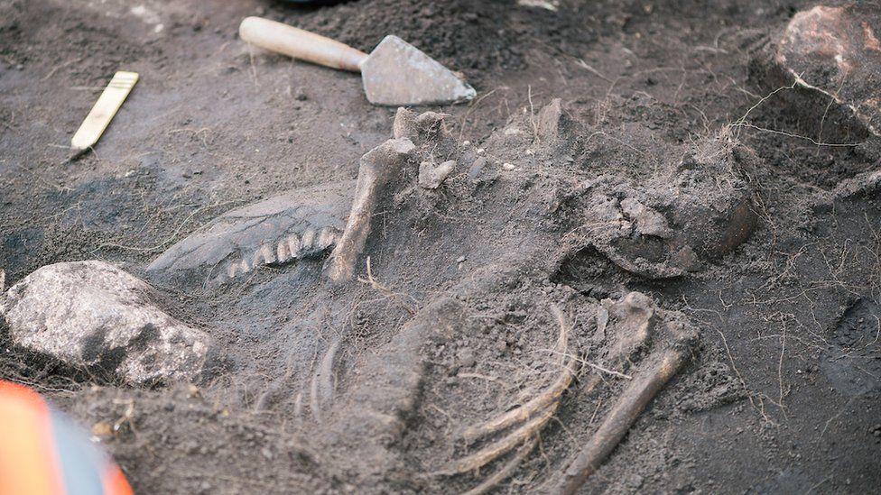 A skeleton found at the Sandby borg massacre site