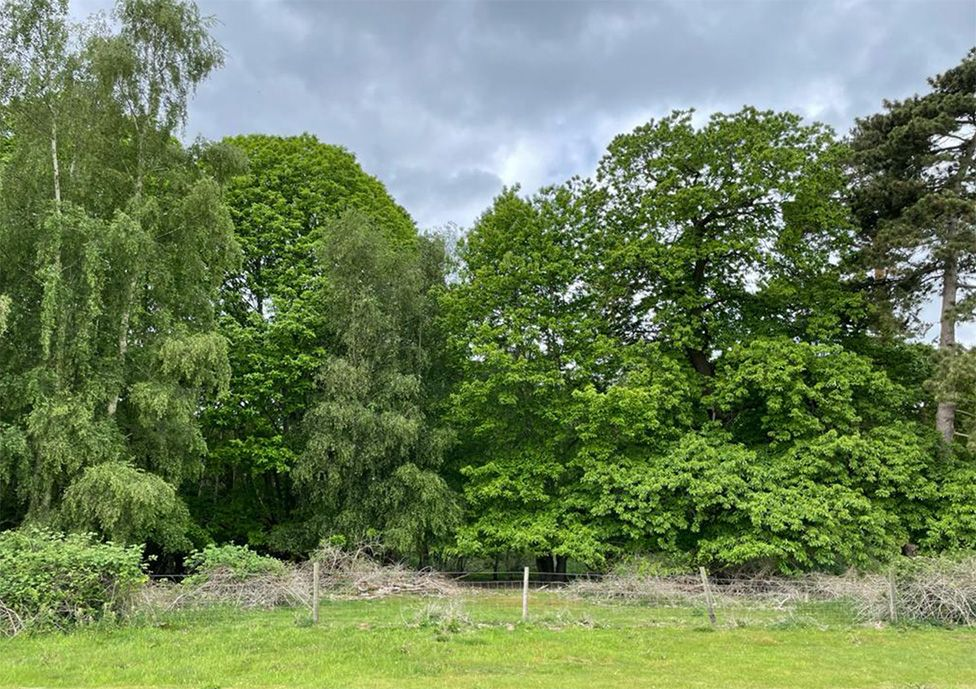 The site of the forthcoming outdoor theatre at Sutton Hoo