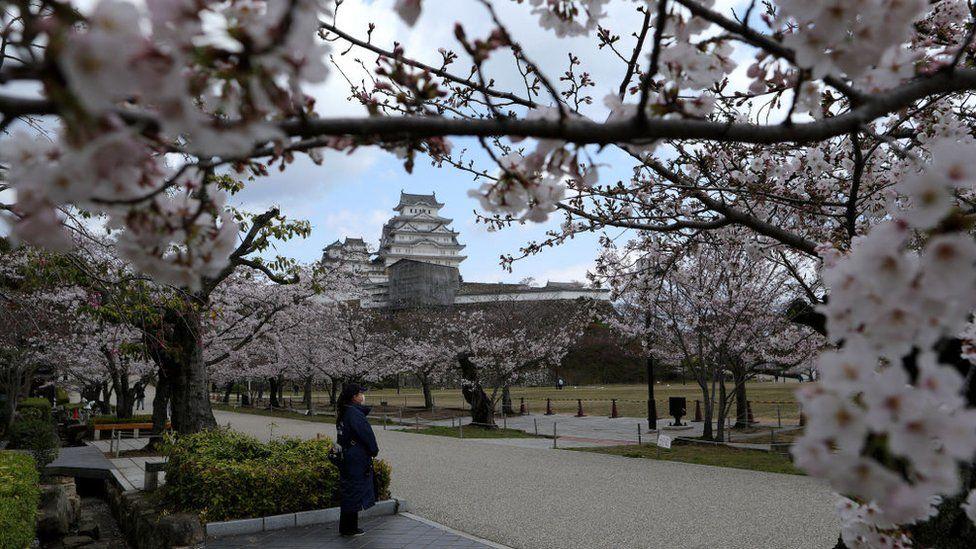 Cherry blossom season last year in Himeji, Japan