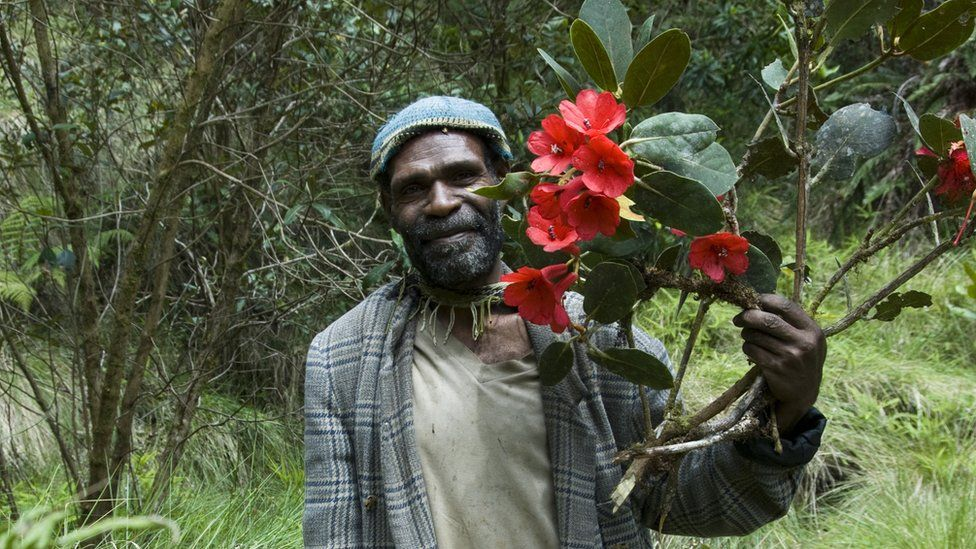 This local guide located a spectacular rhododendron in bloom in the Cromwell Mountains of Papua New Guinea