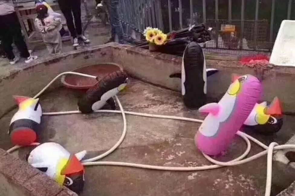 Inflatable penguins at a zoo in Yulin, China