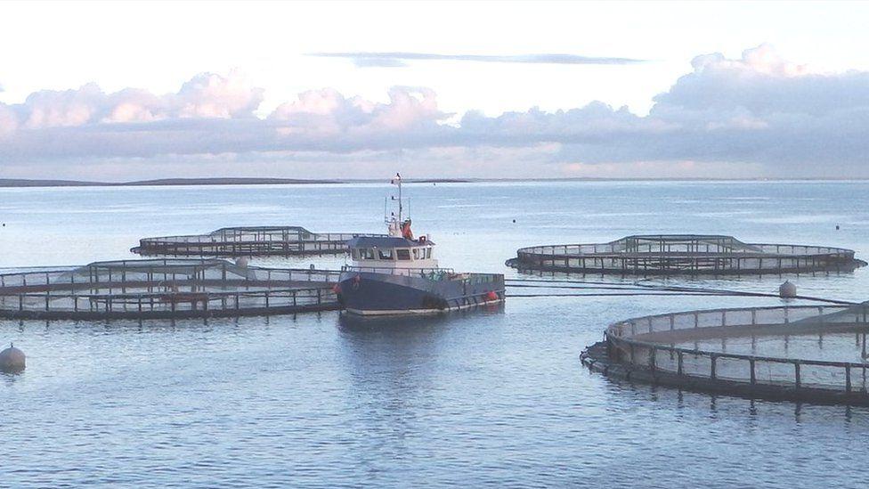 Scottish Sea Farms farm