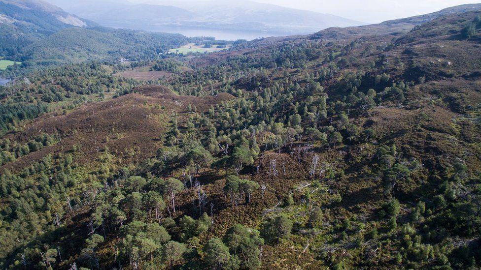 Coille Loch Airceig