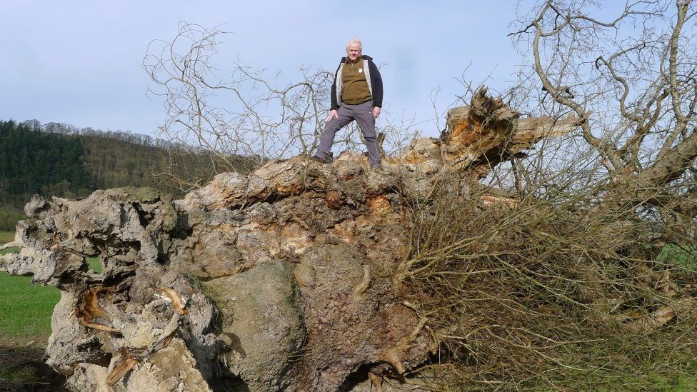 Rob McBride on the fallen tree