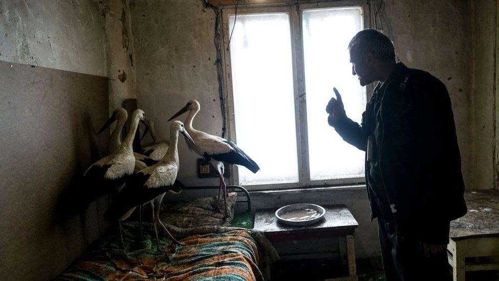 Bulgarian farmer Safet Ismail, 53, with the storks