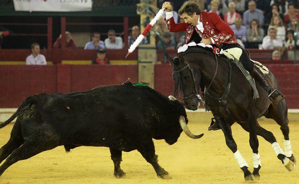 Spanish rejoneador Pablo Hermoso de Mendoza prepares to thrust a banderilla into a bull during the El Pilar Feria in Oct 2016