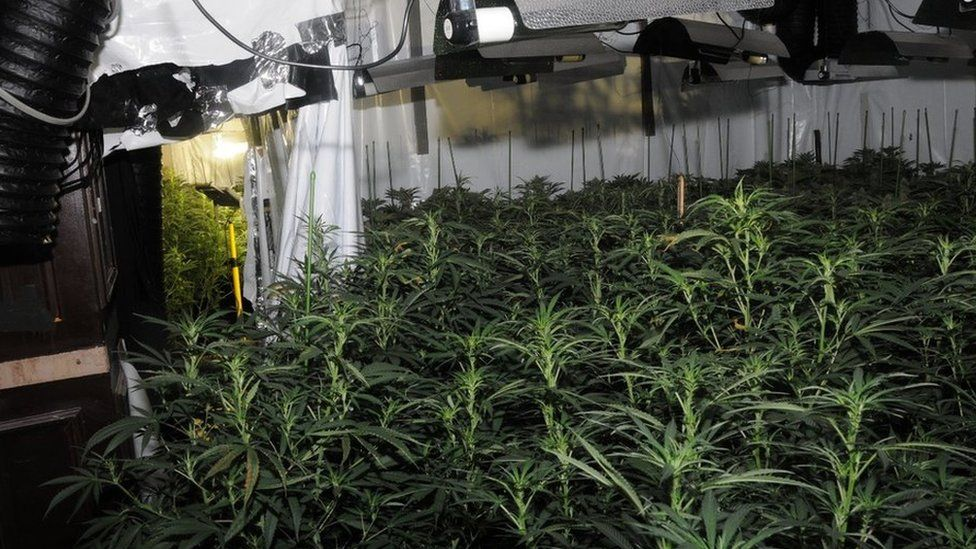 first ever cannabis factory to be discovered close to the Bank of England